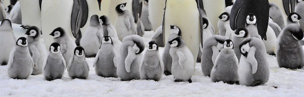 Penguin Reproduction