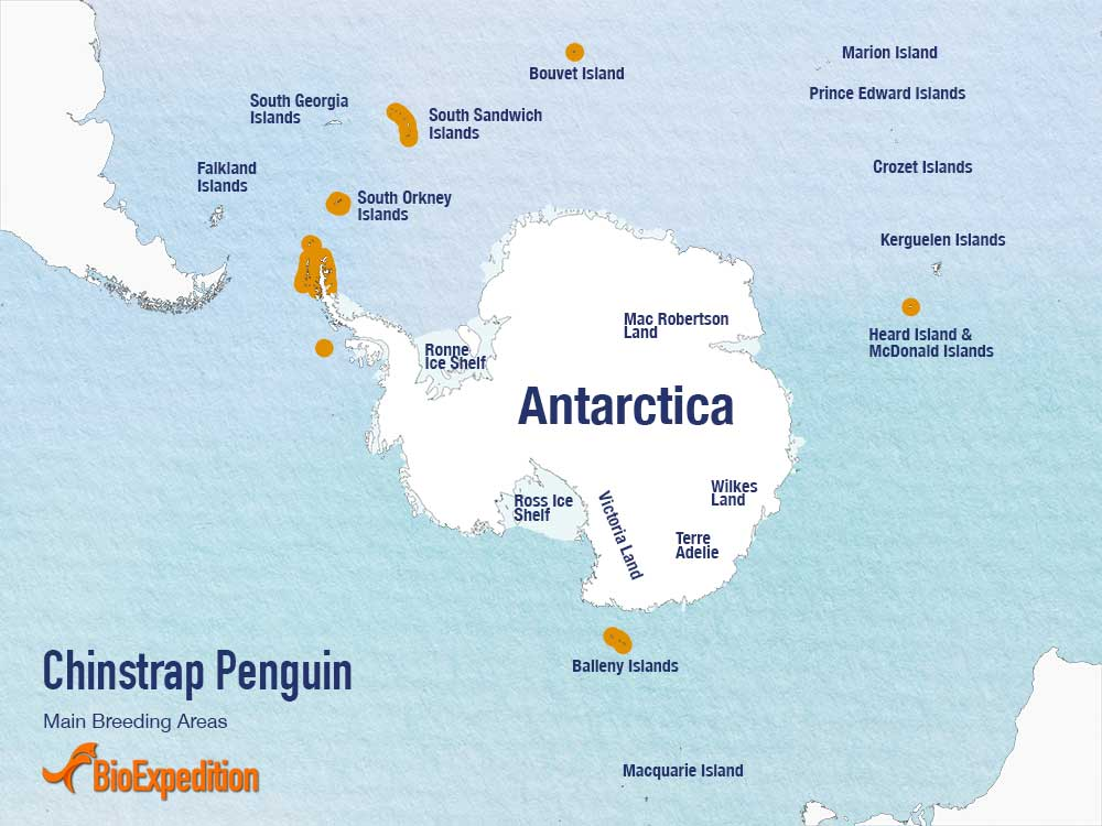chinstrap penguin range map