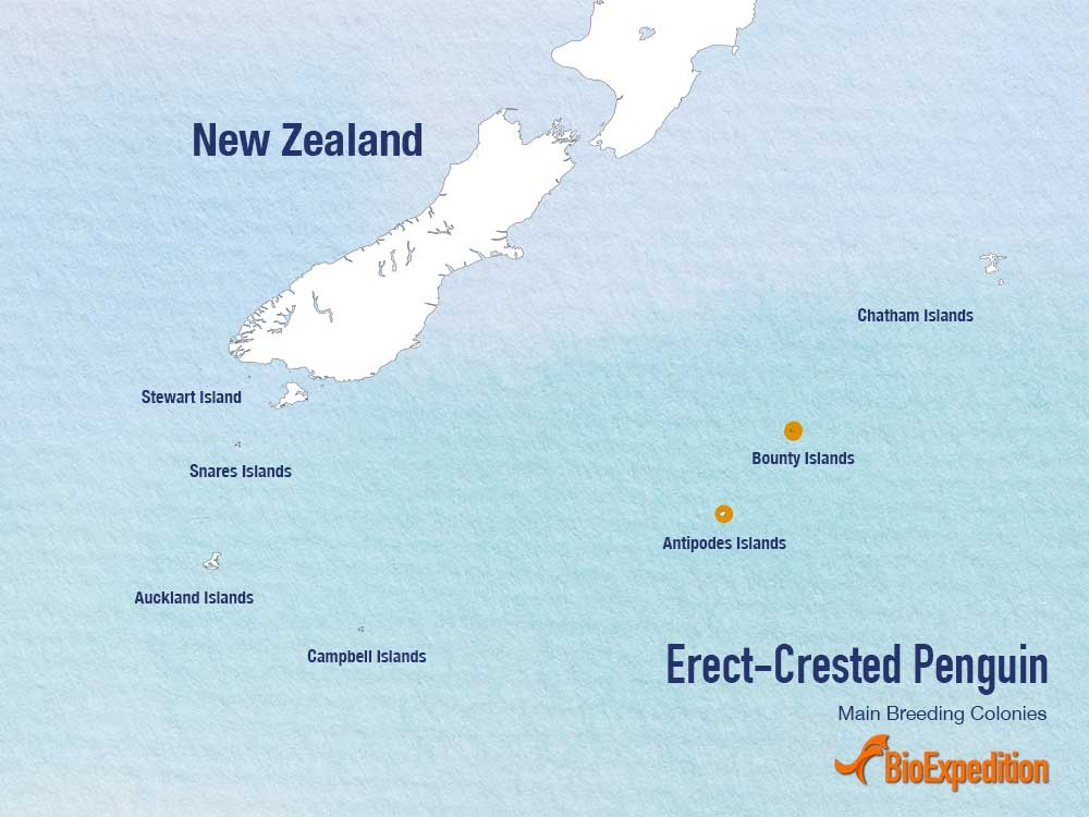 Erect-crested penguin range map.
