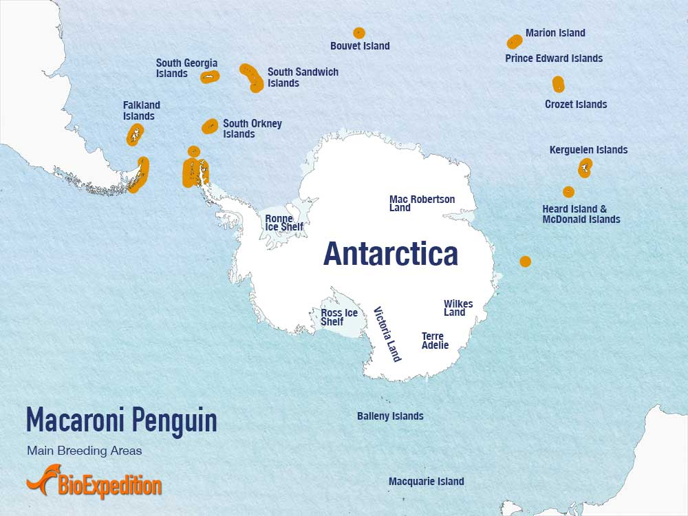 Distribution of Macaroni Penguin.