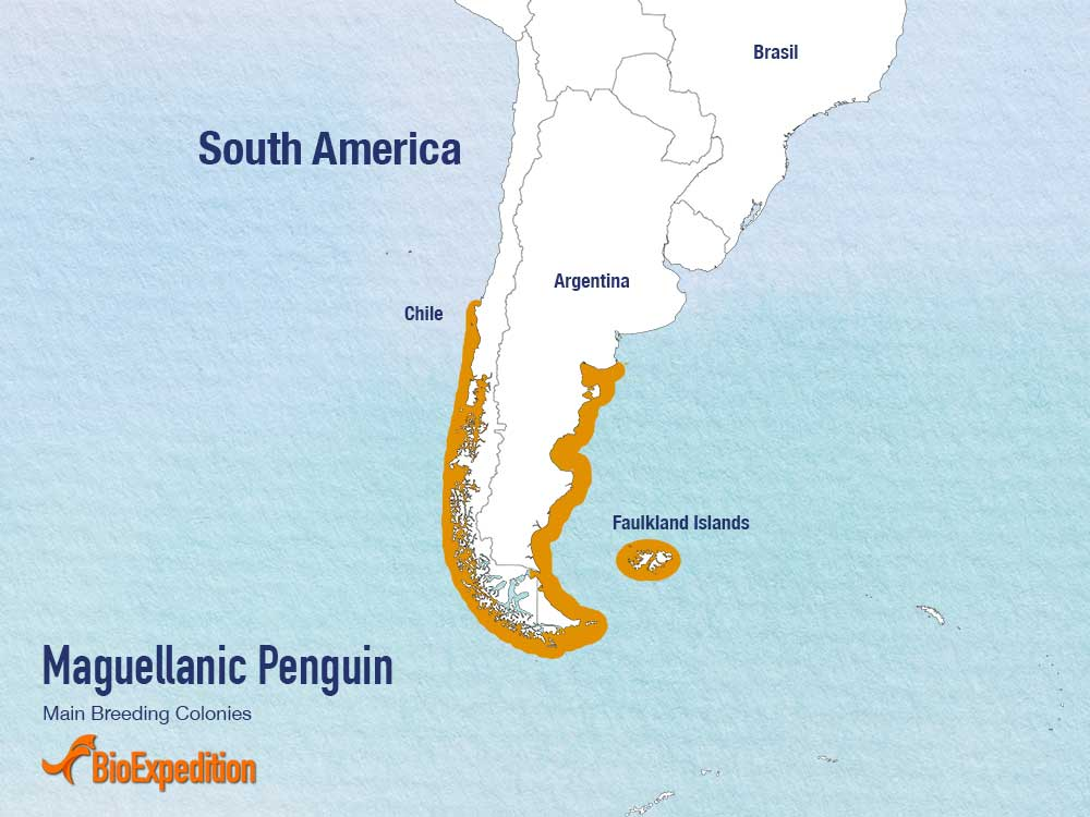 Magellanic penguin range map.