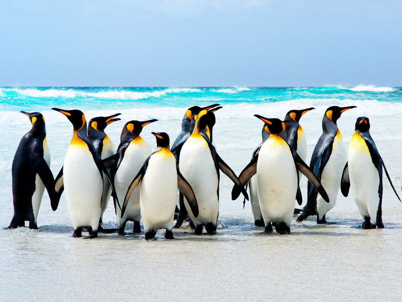 Natural habitat of penguins.