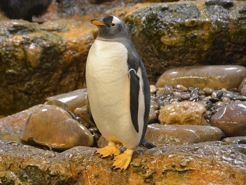 Penguins in Movies