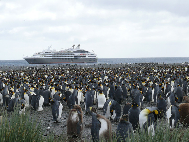 Penguins and Humans