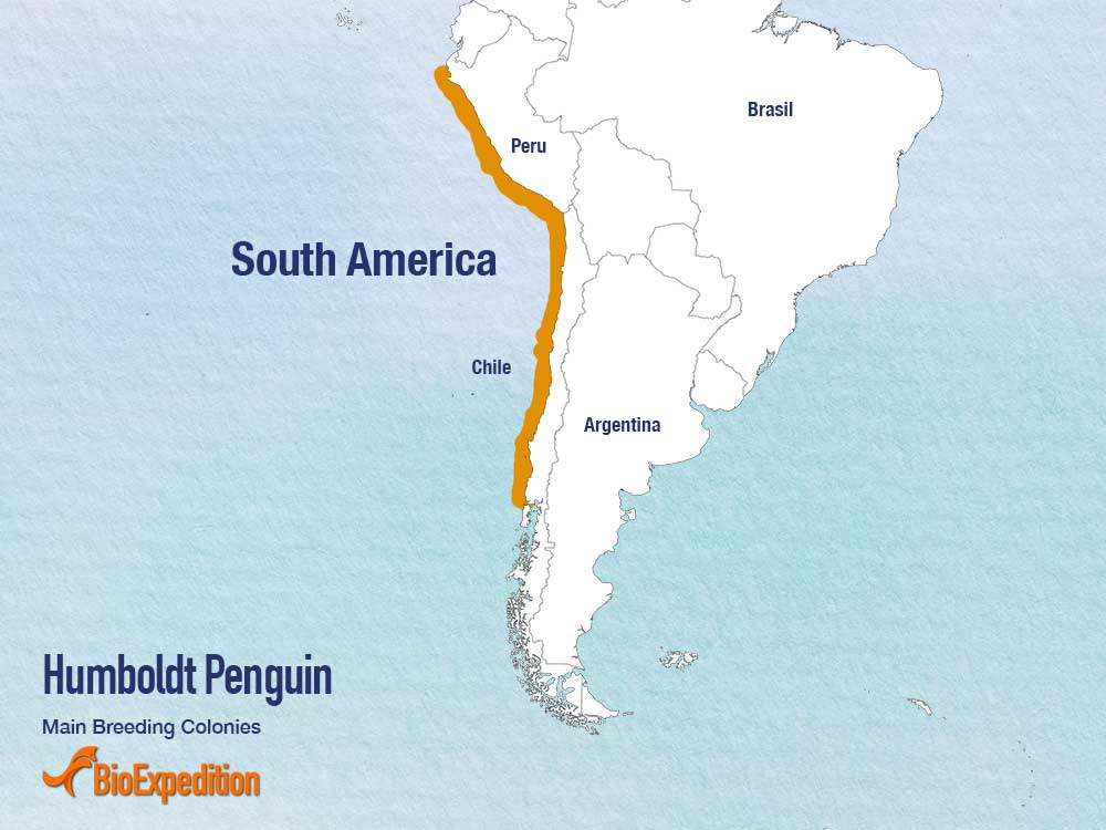 Distribution of Humboldt Penguin.