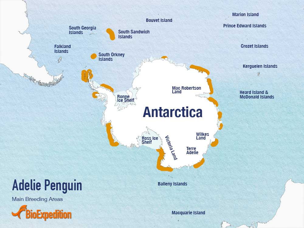 Distribution of Adelie Penguin.