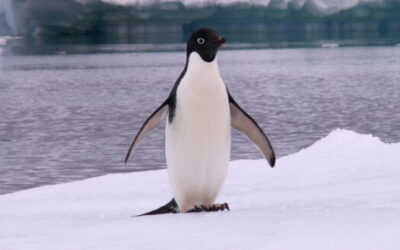 Why Penguins Can't Fly?