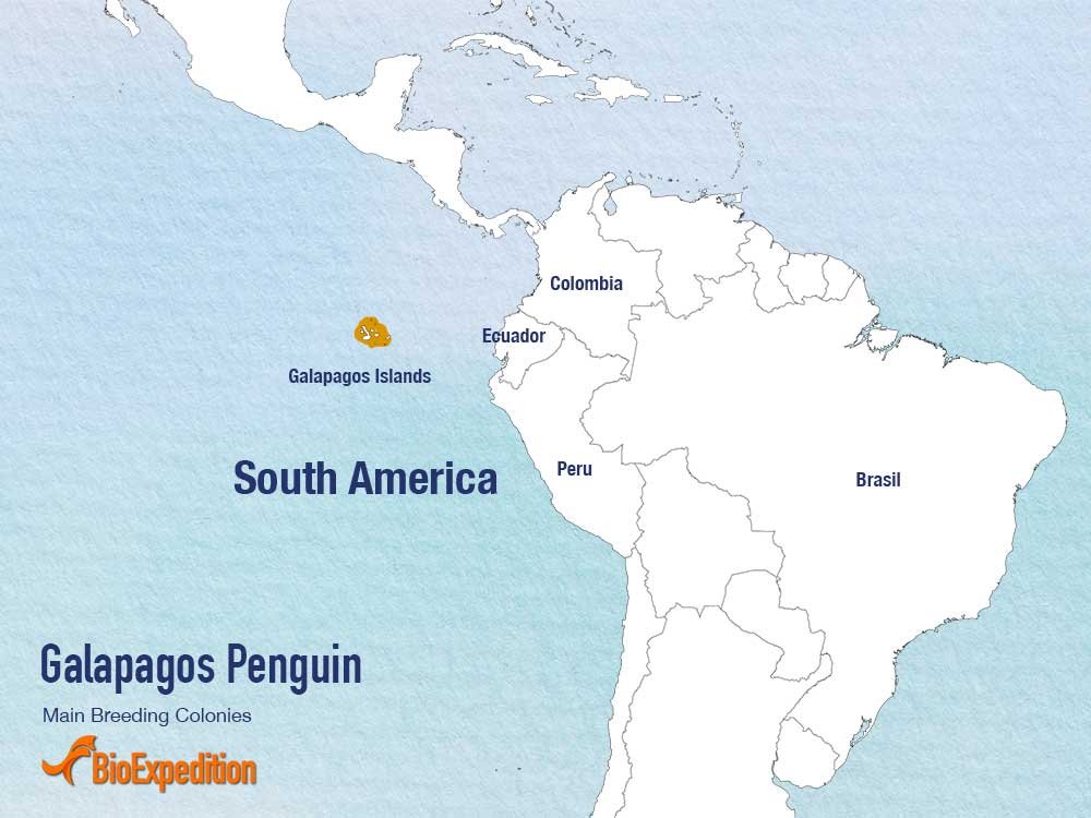 Distribution of Galapagos Penguin.