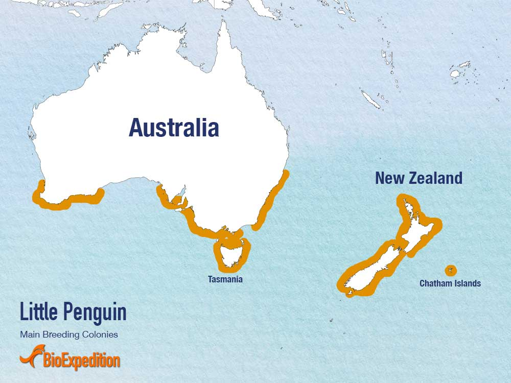 Distribution of Little Blue Penguin.