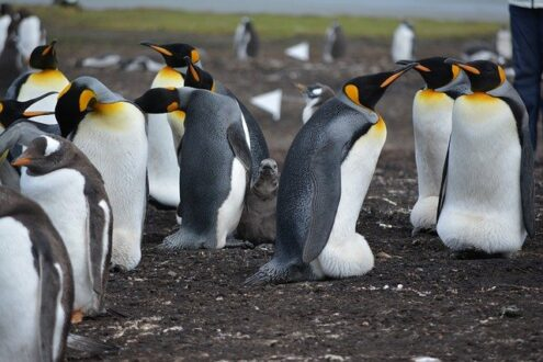 9 Facts about Penguins