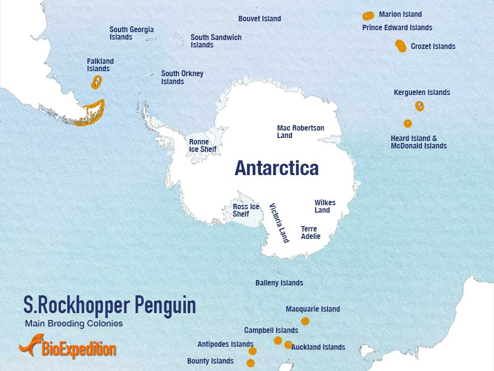 Distribution of Rockhopper Penguin.