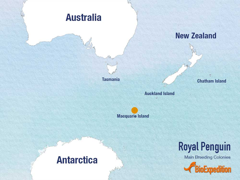 Royal penguin range map.