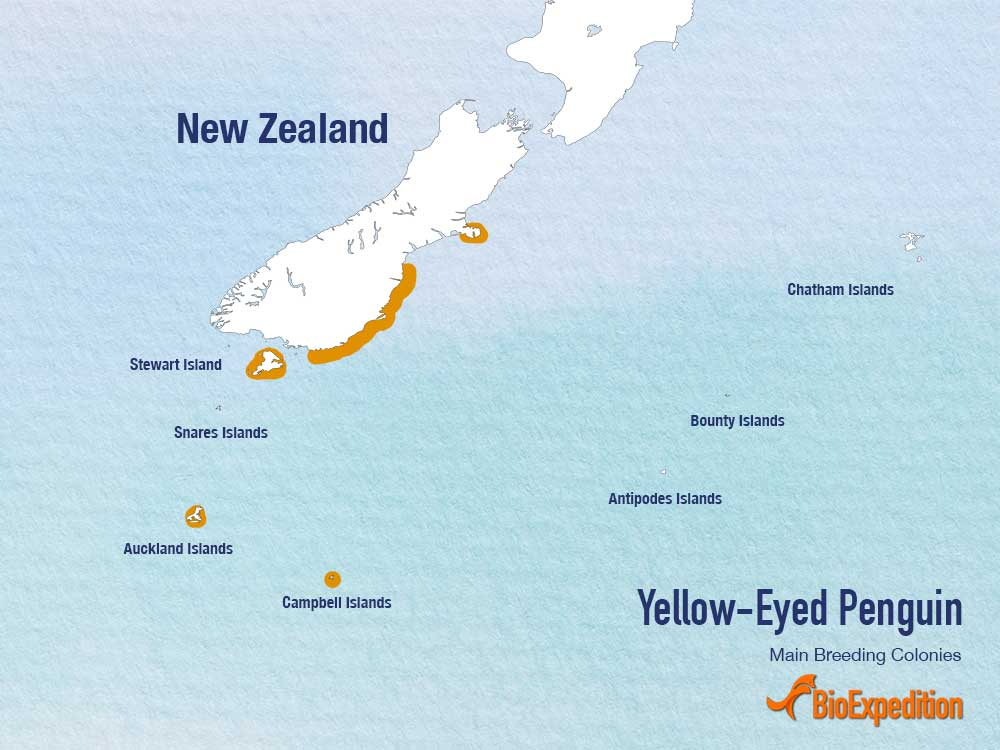 Yellow-Eyed Penguin range map.